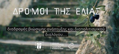 Οι «Δρόμοι της Ελιάς» επιλέχτηκαν από τη Μακροπεριφέρεια Αδριατικής-Ιονίου για χρηματοδότηση μέσω του «Routes4U»