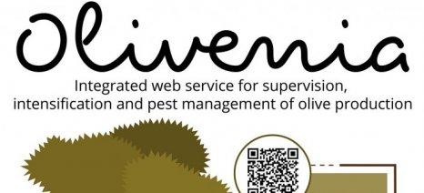Το πρόγραμμα Olivenia, που παρακολουθεί τον δάκο στις ελιές, ζητά χρηματοδότηση μέσω crowdfunding