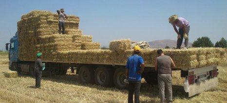 Στα σκαριά διυπουργική επιτροπή για το πρόβλημα με τους αλλοδαπούς εργάτες γης