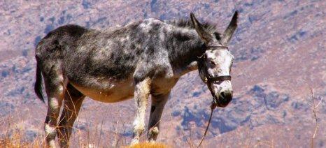 Αυστηροί έλεγχοι και βαριά πρόστιμα για την κακομεταχείριση ζώων