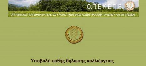Σειρά ενημερώσεων ξεκινά ο ΟΠΕΚΕΠΕ για τις δηλώσεις ΟΣΔΕ σε όλη την Ελλάδα