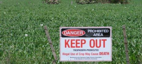 Μέσα στον Οκτώβριο θα νομιμοποιηθεί η καλλιέργεια οπίου στη Νότια Αυστραλία
