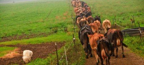 Η υψηλή πυκνότητα βόσκησης στην Κεντρική Μακεδονία αδικεί όσους θέλουν να ενταχθούν στη βιολογική κτηνοτροφία