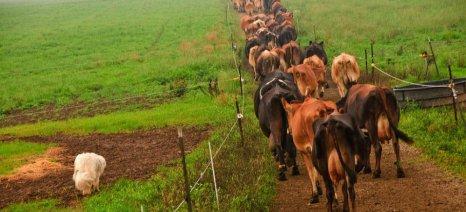 Πληρώθηκαν τη Δευτέρα 29 εκατ. ευρώ σε 7.000 δικαιούχους του προγράμματος Βιολογικής Κτηνοτροφίας