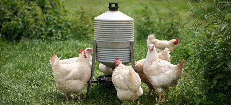 Δεύτερη αναβολή στις αιτήσεις για τη Βιολογική Κτηνοτροφία - έως 20 Απριλίου η προθεσμία