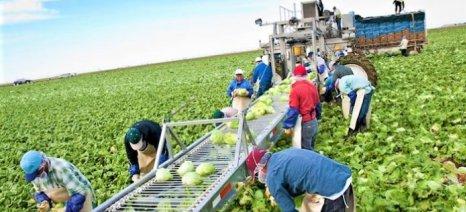 Σημαντικές για το αγροτικό εισόδημα οι Οργανώσεις Παραγωγών αλλά με πλήθος προβλημάτων
