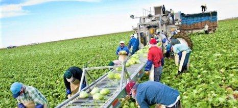 Βάσει τζίρου τριετίας των μελών η πρώτη πληρωμή των Οργανώσεων Παραγωγών