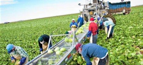 Επίδομα ανεργίας σε συνδυασμό με απασχόληση σε συγκομιδή και τυποποίηση οπωροκηπευτικών ζητούν οι εξαγωγείς