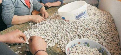 Στροφή αγροτών σε όσπρια-ψυχανθή