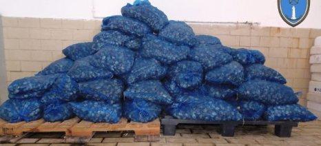 Δύο τόνοι ακατάλληλα όστρακα κατασχέθηκαν στην Αλεξανδρούπολη