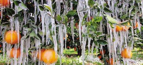 Ως τις 25 Ιανουαρίου οι δηλώσεις ζημίας από τον παγετό στο Δήμο Αρταίων