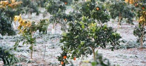 Ενημέρωση παραγωγών της Μαγνησίας για τις ζημιές σε δέντρα και κηπευτικά από τον παγετό