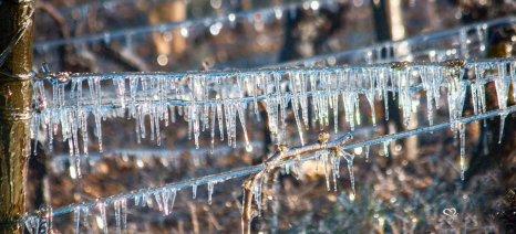 Αιτήσεις αποζημιώσεων ΕΛΓΑ για ανεμοθύελλα και παγετό στους δήμους Μονεμβασίας και Σπάρτης έως 16 Ιανουαρίου