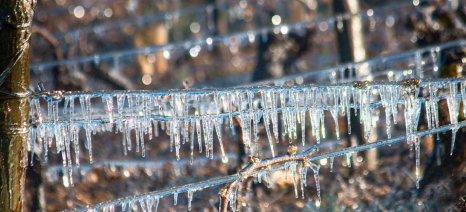 Μέχρι 25 Ιανουαρίου οι δηλώσεις ζημιάς από παγετό στο δήμο Σπάρτης