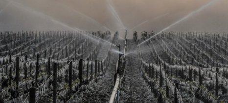 Περίπου σε 1,5 δισ. ευρώ υπολογίζονται οι ζημιές από τον παγετό στους αμπελώνες της Γαλλίας