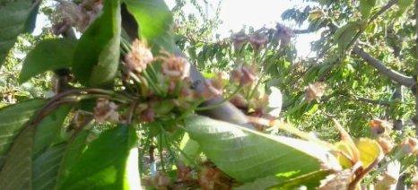 Ζαννιάς προς Παπαδόπουλο: Θα επανεξετάσει τις αποζημιώσεις αγροτών της Αγιάς ο ΕΛΓΑ
