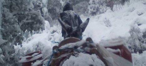 Δραματική έκκληση από τους κτηνοτρόφους της Λέσβου
