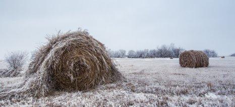 Περίπου 1.000 δηλώσεις υποβλήθηκαν στον ΕΛΓΑ Αγρινίου για ζημιές από παγετό