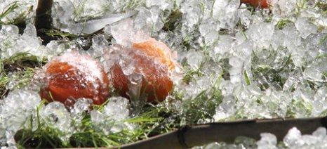 Δηλώσεις ζημιάς για παγετό στην Ξάνθη έως 2 Φλεβάρη