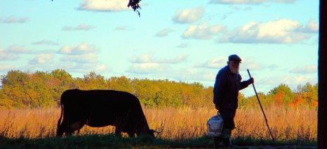 Αλυσιδωτές αντιδράσεις για την εγκύκλιο που αναγκάζει συνταξιούχους ετεροεπαγγελματίες αγρότες να πληρώνουν εισφορές στον ΕΦΚΑ