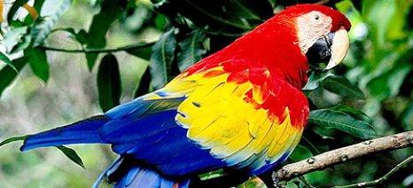 Ερευνητές ανακάλυψαν το μυστικό των παπαγάλων