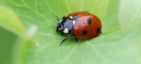 Ωφέλιμα έντομα από τον Δήμο στα πάρκα της Καλαμάτας
