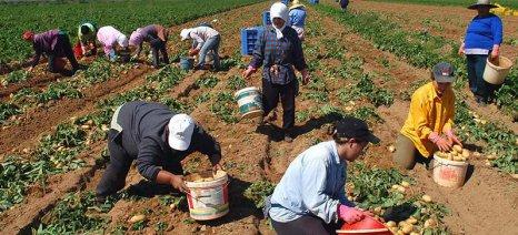 Περιφερειακή Ενότητα Μεσσηνίας: Οδηγίες για τους παραγωγούς πατάτας