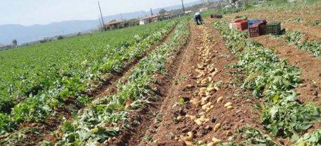 Έως 30 Σεπτεμβρίου αιτήσεις για στρεμματική ενίσχυση της φθινοπωρινής πατάτας στα νησιά του Αιγαίου