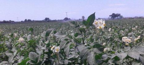 Αναζητείται η «χρυσή τομή» για τις υποθηκευμένες εκτάσεις στα «κόκκινα» δάνεια αγροτών - συνεταιρισμών