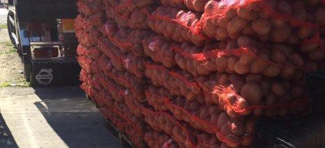 Τζελέπης: Οι εισαγωγές πατάτας αμφιβόλου ποιότητας πλήττουν τους καλλιεργητές της Ορεινής και της Άνω Βροντούς