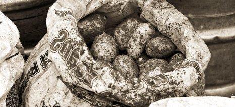 Δηλώσεις από τους παραγωγούς ανοιξιάτικης πατάτας νησιών Αιγαίου