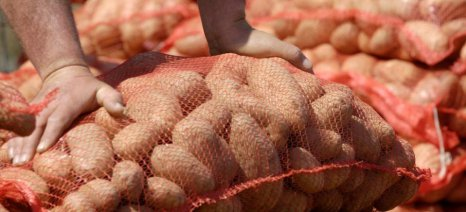 Φυτοϋγειονομικούς ελέγχους για να ανακοπούν οι εισαγωγές πατάτας ζητά ο Λαμπρόπουλος από το ΥΠΑΑΤ