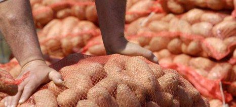 Εξαρθρώθηκε κύκλωμα ελληνοποίησης γαλλικής πατάτας - συνελήφθησαν πέντε άτομα