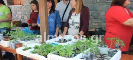 Η 7η γιορτή ανταλλαγής ντόπιων σπόρων στον Παλιό Πλάτανο Αλμυρού από την τοπική ομάδα του Πελίτι