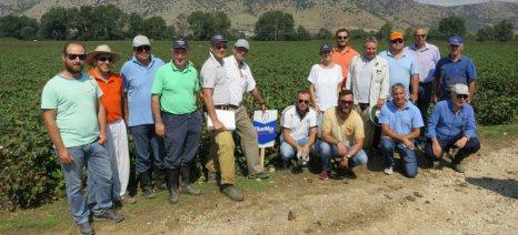 Ημέρες αγρού για τις ποικιλίες βαμβακιού Fibermax διοργάνωσε ο τομέας Επιστήμης Γεωργίας της Bayer