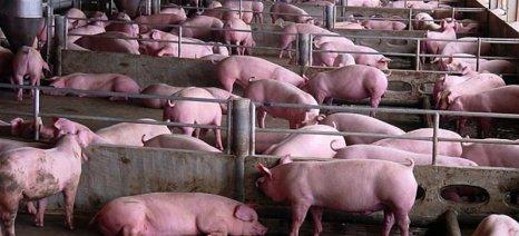 Δύο εταιρείες παραγωγής ρεύματος από βιοαέριο συνεργάζονται με τη μεγαλύτερη βιομηχανία χοιρινού κρέατος στις ΗΠΑ