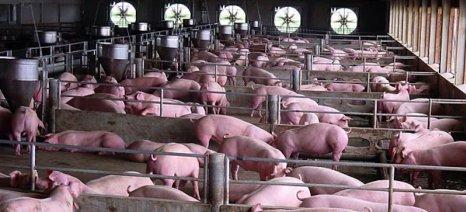 Ο ΠΟΕ δικαιώνει την Ευρώπη έναντι του ρωσικού εμπάργκο στο χοιρινό κρέας