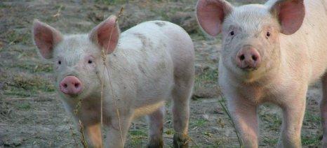 Η EFSA αναθεωρεί το μέγιστο περιεχόμενο σε άνθρακα στις ζωοτροφές