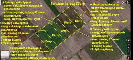 Πιλοτικός αγρός για εναλλακτικές πρακτικές στην καλλιέργεια του σκληρού σιταριού στήθηκε στο Βελεστίνο