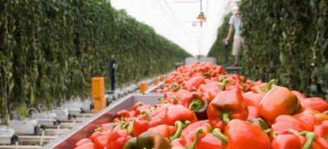 Μεταπτυχιακό πρόγραμμα για «Καινοτόμα Συστήματα Αειφόρου Αγροτικής Παραγωγής»