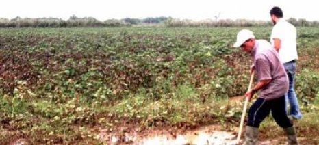 Αποζημιώσεις εντός του Φλεβάρη για τις ζημιές του περασμένου Ιουνίου στα σιτάρια της Φύσκας Κιλκίς