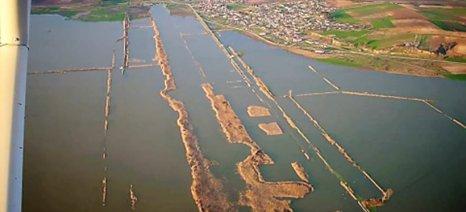 Ο ΕΛΓΑ για τις δηλώσεις δέντρων που ξεράθηκαν από πλημμύρες