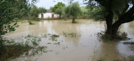 Σχεδόν ολοκληρωτική καταστροφή στις βιοκαλλιέργειες της Επανομής μετά τις πλημμύρες