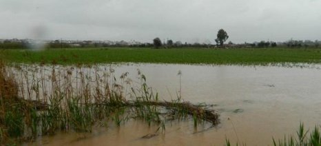 Έτοιμα δύο πορίσματα εκτίμησης του ΕΛΓΑ για ζημιές του 2014 στη Μεσσηνία