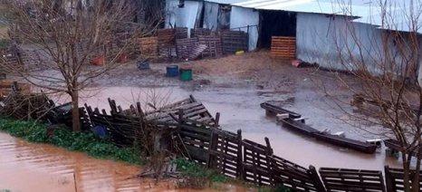 Πνίγηκαν μαντριά και χωράφια στην Αμυγδαλή Αγιάς - σωτήριος ο ταμιευτήρας Σ3 της Κάρλας