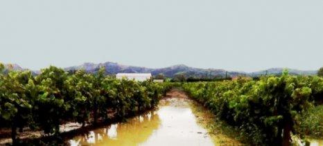 Χαλάζι και πλημμυρικά φαινόμενα έπληξαν τις καλλιέργειες στα Φάρσαλα