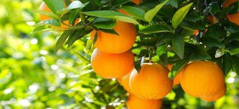 Eurostat: Πάνω από τα μισά ευρωπαϊκά πορτοκάλια είναι από την Ισπανία - Η παραγωγή και εμπορία σε Ελλάδα και Ε.Ε.