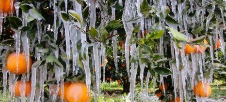 Παγετός σε όλο το νομό Ηλείας - Ζημιές σε εσπεριδοειδή, κηπευτικά, θερμοκήπια