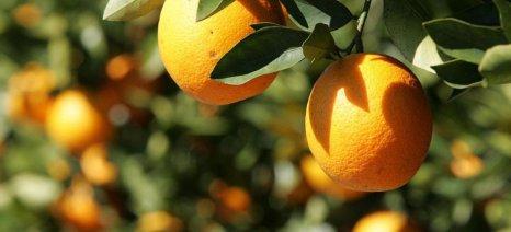 Θετική εξέλιξη για την αντιμετώπιση του διαλευρώδη στην Ηλεία σε συνεργασία με το Μπενάκειο Ινστιτούτο