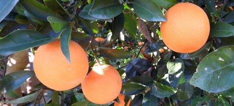 Πώς ορίζονται οι επιλέξιμοι για συνδεδεμένη ενίσχυση παραγωγοί πορτοκαλιού για χυμό